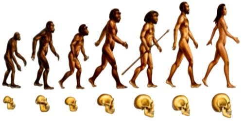 Perdida de dientes, una cuestión evolutiva