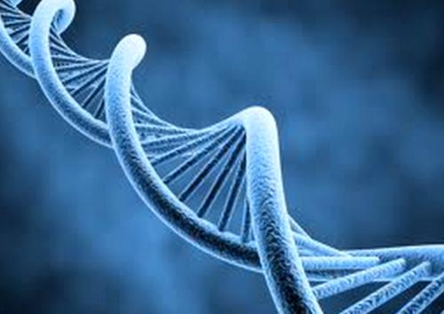 Caries, su predicción por genes del gusto