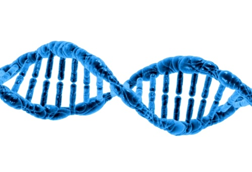 proteína estimula la regeneración ósea y dental