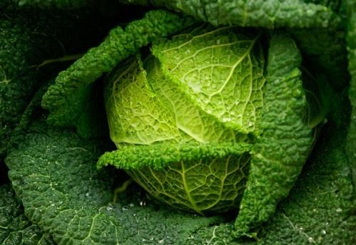 Verduras de hoja verde contra el cáncer oral