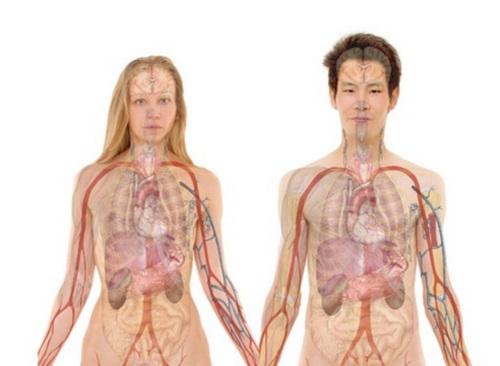 diálisis renal