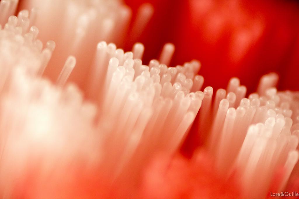5 tips para desinfectar un cepillo de dientes