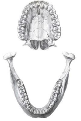 dentistas-en-madrid-plano-oclusal