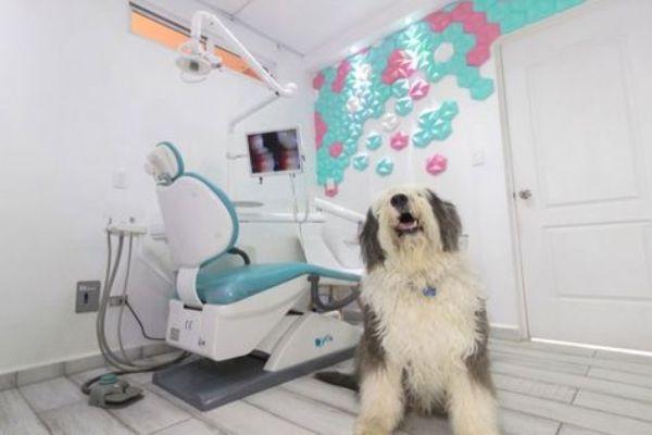 perro en la consulta