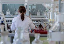 La clorofila de un alga marina, en la mira de investigaciones para el éxito de futuras endodoncias