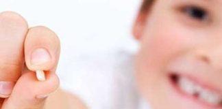 dientes de leche celulas madre