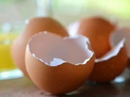 cascara de huevo