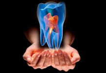 diente celulas madre
