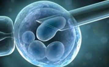 celulas madre argentina
